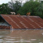 flood-myanmar-dogs